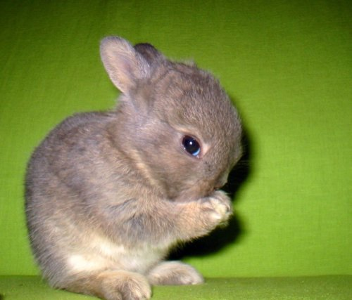 thefluffingtonpost:  PHOTO OP: Shy Bunny Wants to Say Hello Via Charles Crosbie.