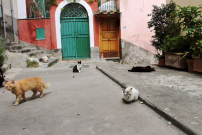Stray Cats on Flickr. Positano, Italy