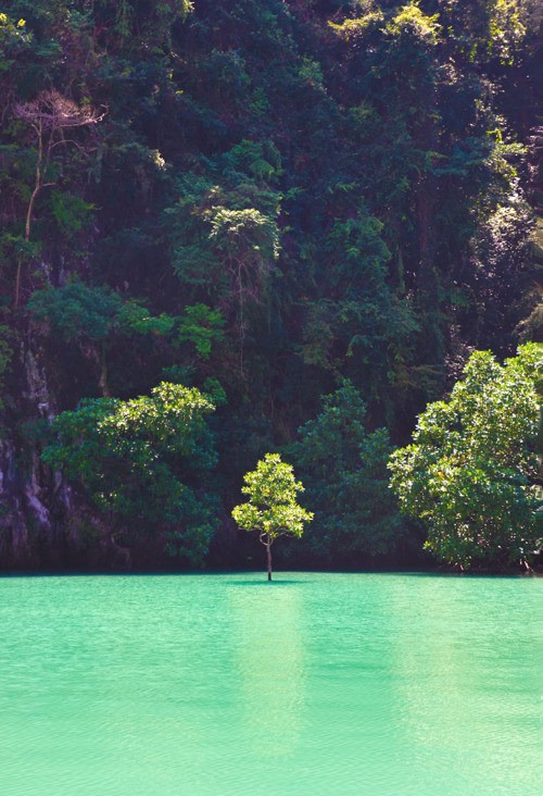 opcion:  A tree in the middle of water
