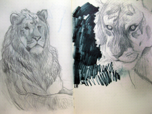 FYI the left one is a liger :3