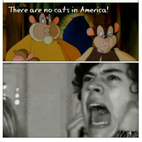 #harrystyles #anamericantail #cats #onedirection I made this so please gimme some credit! (Taken with instagram)