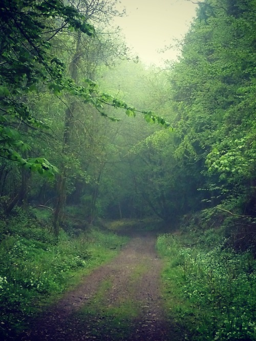tricksylittlehobbitses:  The Forest of Dean.