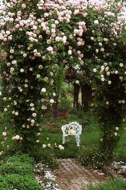 magic garden of roses