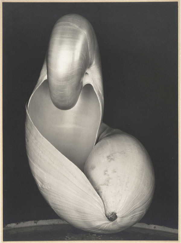 "elskov:  Edward Weston. Two Shells, 1927. Gelatin silver print; 9-¼ x 6 7/8"".  Collection SFMOMA; Albert M. Bender Collection, Bequest of Albert M. Bender. © 1981 Center for Creative Photography, Arizona Board of Regents."
