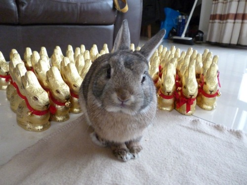 dailybunny:  It's a Coup d'Etat! Hand Over the Contents of the Kitchen! Thanks, Rosemary!