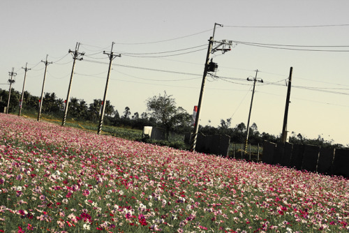 I always love field of flowers. I want to sleep on them.  When we saw this beautiful field, everyone was expecting if the driver would ask if we want to take pictures. And yesah, we stopped and stayed more than what was allowed. Hehe December 28, 2010 - Going to Taroko Gorge, Taiwan