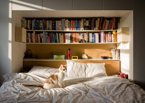 picklesandcats:  This is my dream bed setup (cat included).