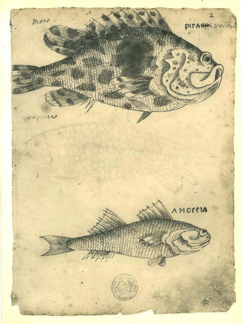 Fishes of Maranhao, Brazil by Frey Cristovao de Lisboa, 1600s.