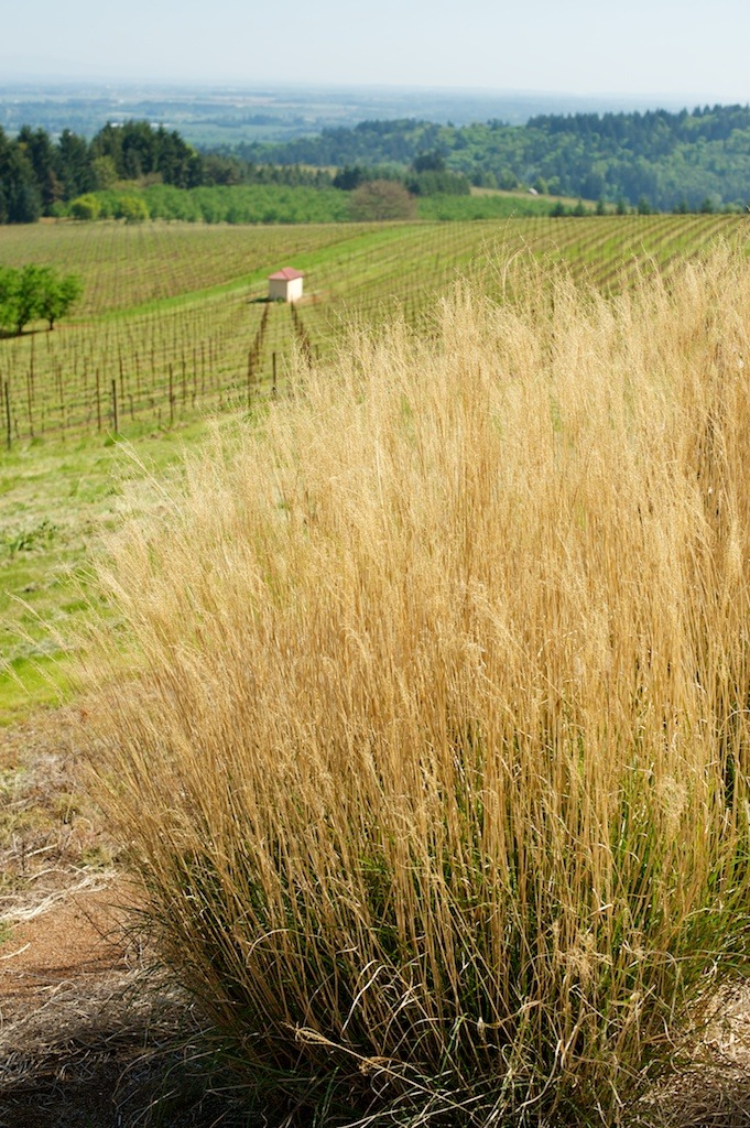 Wine country: Willamette Valley, Oregon