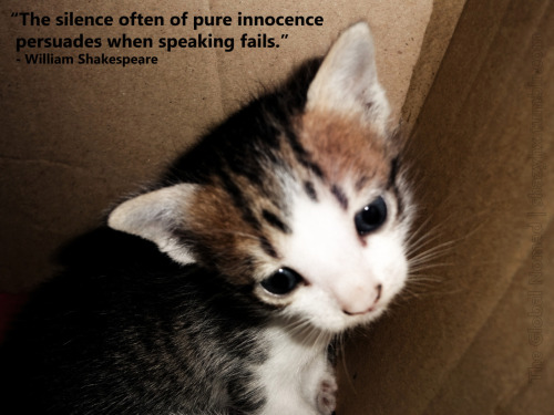 """The silence often of pure innocence persuades when speaking fails.""  William Shakespeare  Photography: Myself. The photo is of one of my kittens. Such innocent eyes."