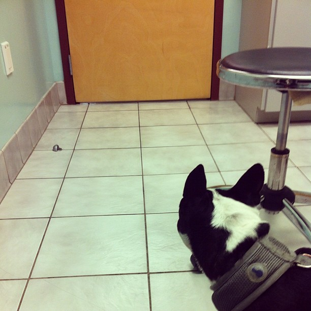 She wants SO badly to escape.   (Taken with Instagram at Flagler Animal Hospital)
