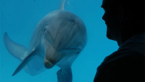 mothernaturenetwork:  Speaker device may lets humans communicate with dolphinsThe device, designed to emit dolphin-like sounds and frequencies, will be used to play noises to dolphins and then scientists will study the responses.