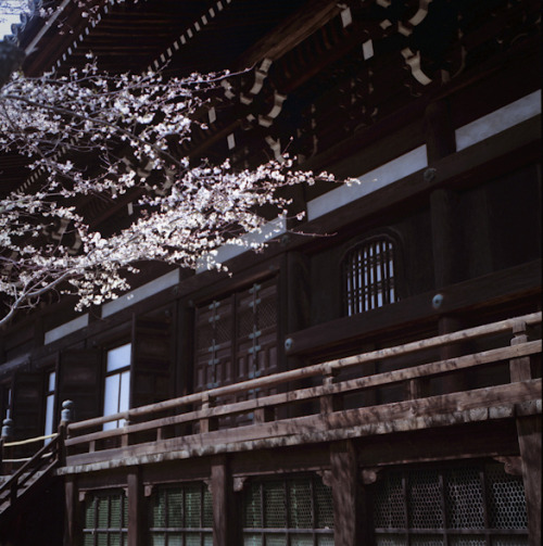 Sakura : 真如堂 by yocca on Flickr.