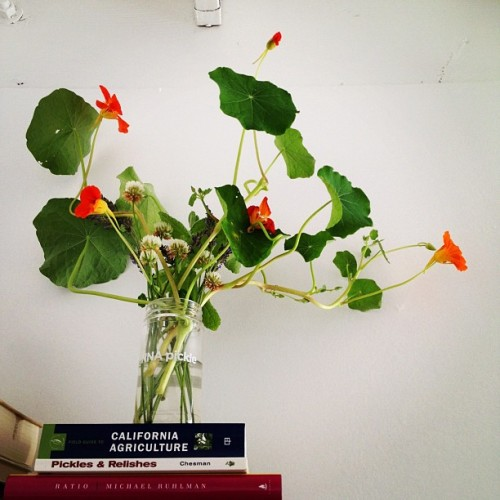 Nasturtiums make awesome cut flowers. They keep living, making new flowers, and they even root! (Taken with instagram)