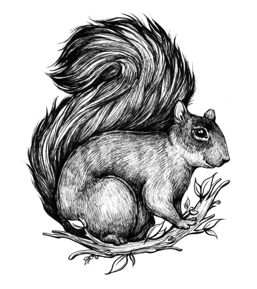 craftspersoncloey:  I'm back and happy to be doing fresh art! Squirrel Ink on bristol