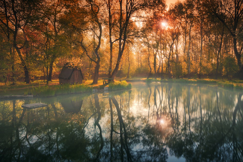 unknownskywalker:  deep in the woods by Adam Dobrovits