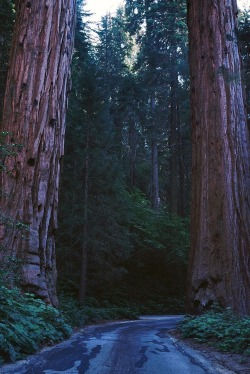 """The wonder is that we can see these trees and not wonder more."" — Ralph Waldo Emerson"