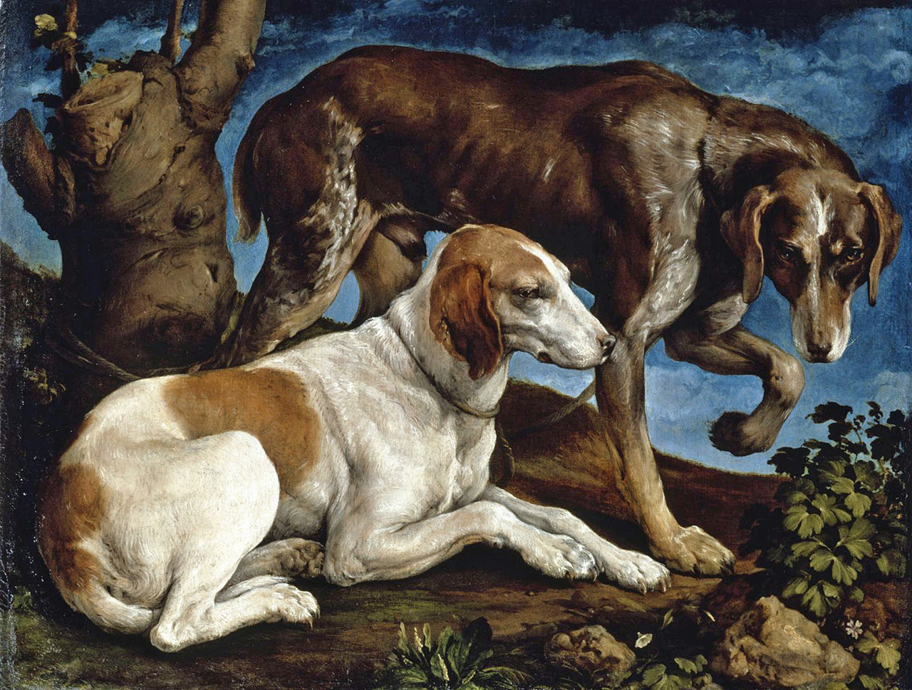 slickwhippet:  Jacopo Bassano (da Ponte), Two Hunting Dogs (1548)