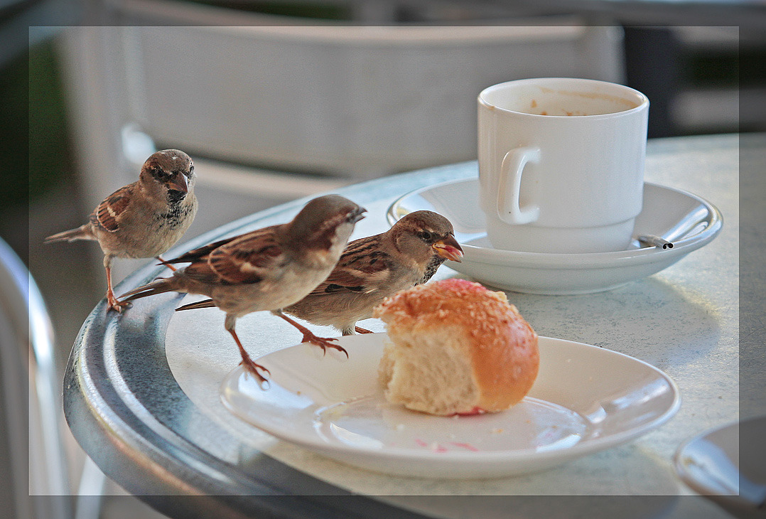 "art-and-dream:   Animals photography wonderful bird Bon appetit :) by Andrew ""Kan   and Good morning :):)  Good morning dear :)"