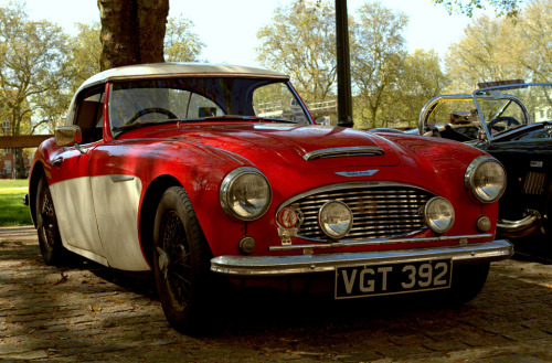 Lazy sunday Starring: Austin Healey 3000 (by Welsh Harlequin)