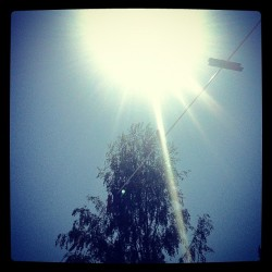 #sun #tree #pegs #hot #weather #sky #blue #instagood #instamood #iphoneography #garden  (Taken with instagram)