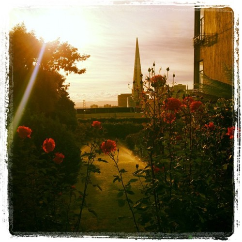 sunbeam, sprinklers, roses - good morning! (Taken with Instagram at Hillgate Manor)