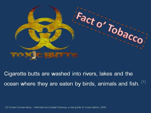 toxicbutts:  Fact o' Tobacco!