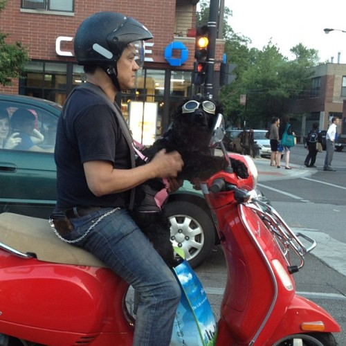 So last night I saw this dog on a scooter & I have serious goggle envy. Amazing, right?