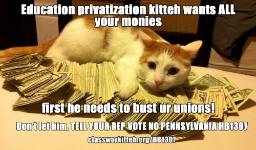 Education privatization kitteh wants all ur monies. First he needs to bust ur unions. Don't let him. Not in Pennsylvania? Share it with your friends. We don't have much time to stop this.
