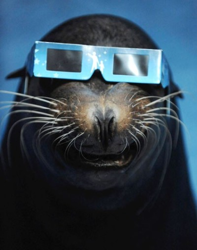 A sea lion wears a solar viewer during an annular solar eclipse at an aquarium in Tokyo.  Picture: REUTERS/Yomiuri Shimbun
