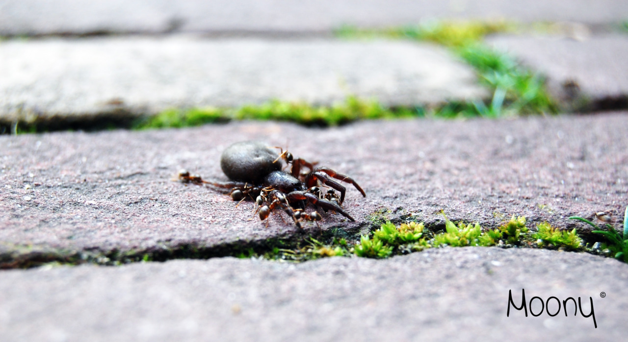 Spider vs Ant war