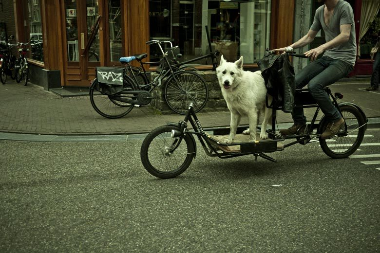 "amsterdam ""never, ever, ever trust anyone who says they don't like dogs! you meet someone who doesn't like dogs you alert the authorities immediately and you sure as shit don't marry them!"" (dr.squires/the wackness)"