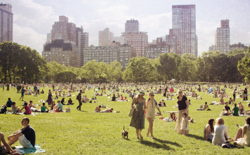 elleinadart:  sheep's meadow