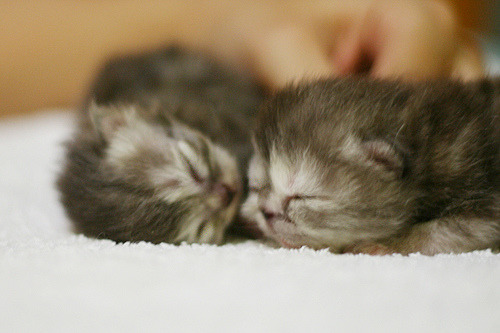 catp0rn:  those little baby faces :'-3