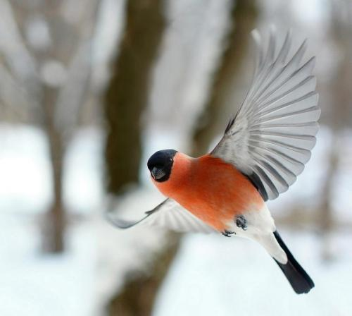 girlforfox:  winter bird