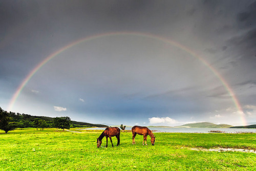 Horses under the rainbow by Evgeni Dinev on Flickr.