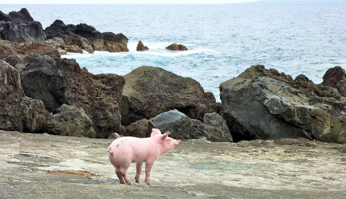 piggy longs for the sea by rites of passage on Flickr.