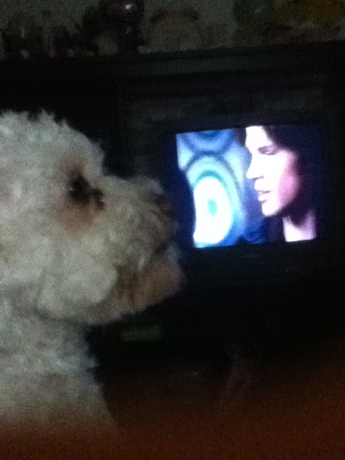 My dog's biggest dream is to give Sam Winchester a kiss.