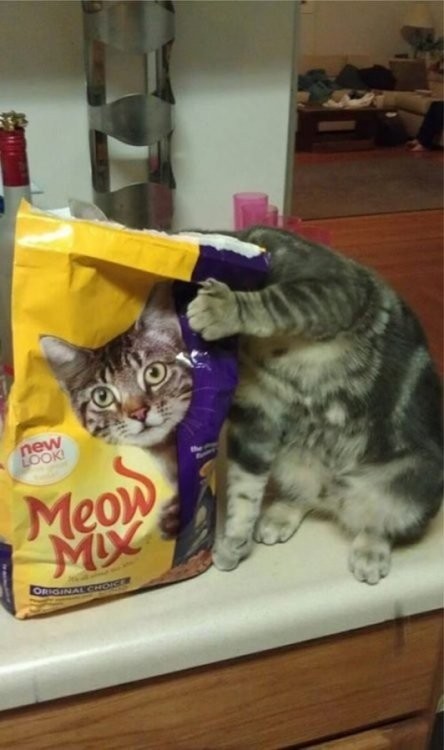 collegehumor:  Cat Body Aligns with Cat Head on Meow Mix BagOr is there a hole in the bag?