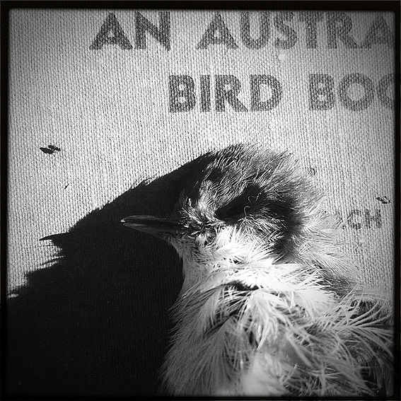 rhondaayliffe: Rhonda Ayliffe  'An Australian Bird Book' and found dead wren  (via art and etc: art gesture sunday - week 19…)