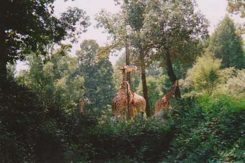 10bullets:  untitled by Ivanabogdan on Flickr.