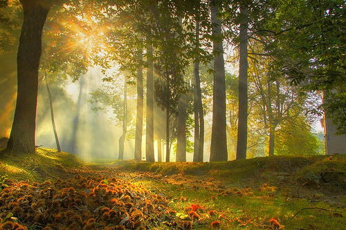 bluepueblo:   Sunrise Forest, Modena, Italy photo via shylake