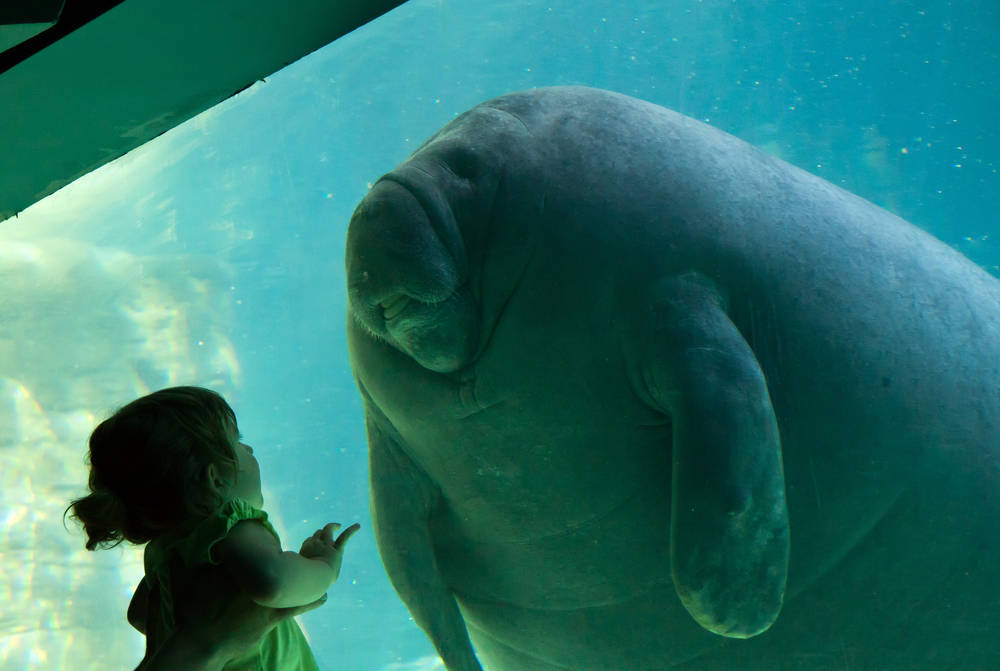 (via Manatee and kid - Boing Boing)