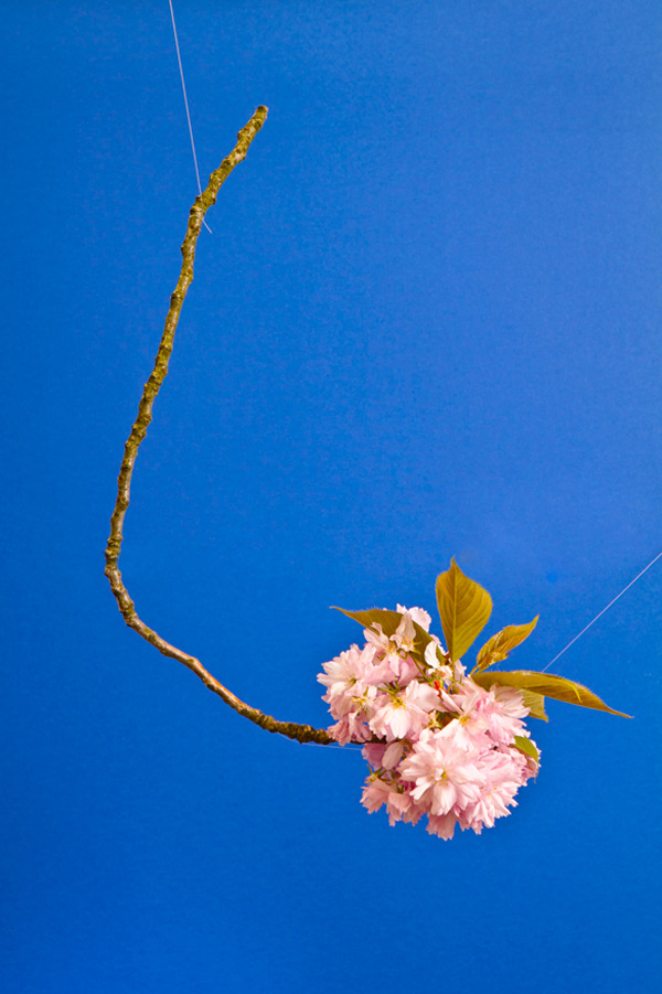 booglarized:  blossom via