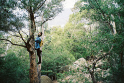 In a tree by ohphilippa on Flickr.