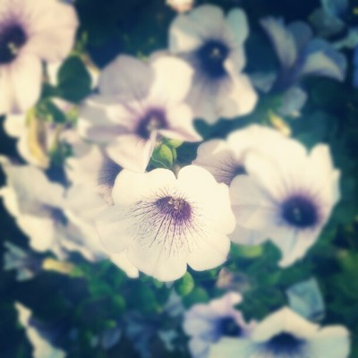 Violets (Taken with instagram)