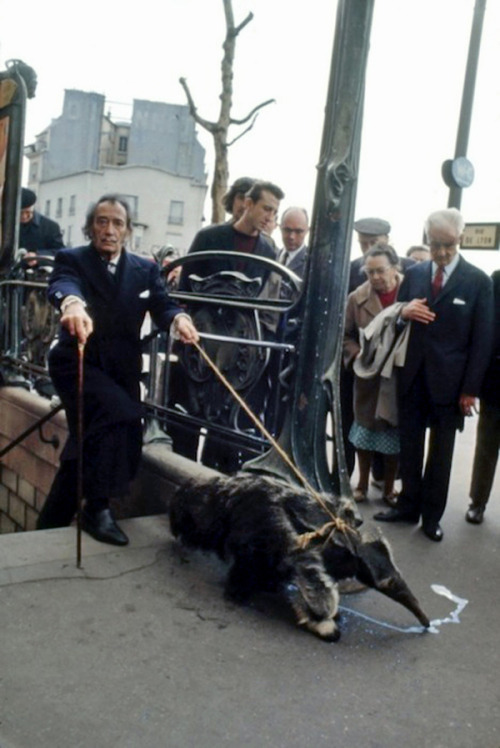vintagefountain:  Salvador Dali and his pet anteater