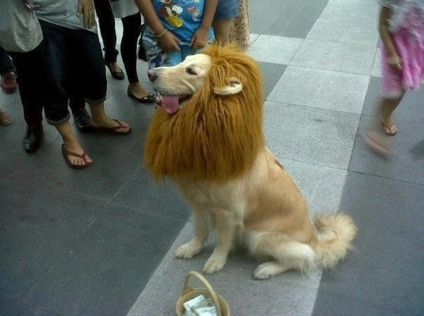 heart-shaped-bruisesss:  meme-meme:  Trust me, I'm a lion.  look at that tongue