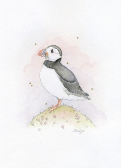 puff puff puffin watercolour, gold acrylic and graphite  by Calliope Bridge