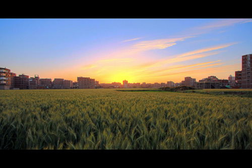 [HDR] Sunset at Wheat Field #2 on Flickr.